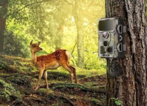 Best Cellular and Wireless Trail Cameras